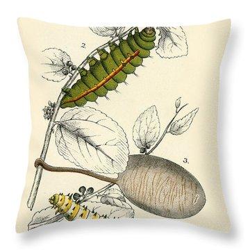 Butterflies Throw Pillow by English School