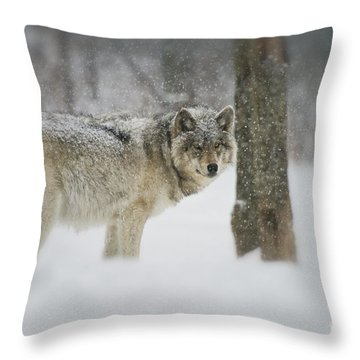 Timber Wolf Pictures Throw Pillow