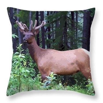 100_0547 Young Bull Elk In Albert Canada Throw Pillow