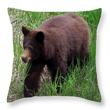 100414 Black Bear Throw Pillow by Garland Oldham