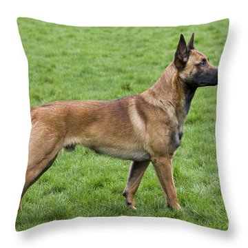 101130p020 Throw Pillow
