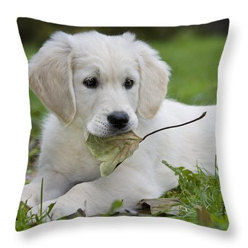 101130p064 Throw Pillow by Arterra Picture Library