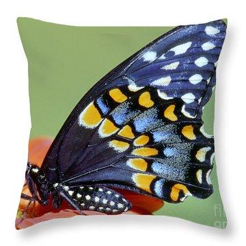 Eastern Black Swallowtail Butterfly Throw Pillow by Millard H. Sharp