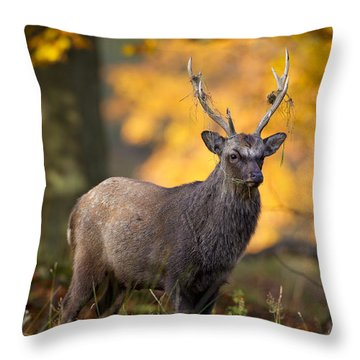 110307p073 Throw Pillow