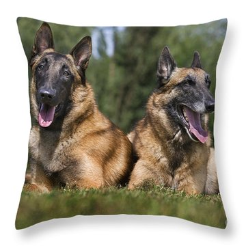 110506p116 Throw Pillow