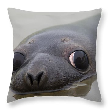 110714p127 Throw Pillow