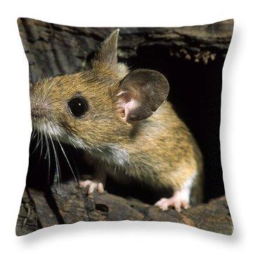 111216p259 Throw Pillow