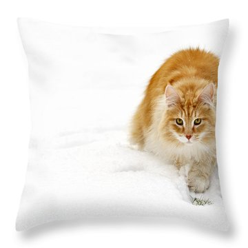 111230p310 Throw Pillow