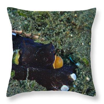 A Coconut Octopus, Lembeh Strait Throw Pillow by Steve Jones