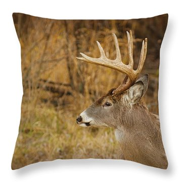 12 Point White-tail Throw Pillow