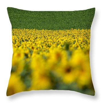 Sunflowers Throw Pillow by Bernard Jaubert