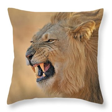 120118p081 Throw Pillow
