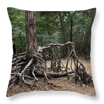 120223p257 Throw Pillow by Arterra Picture Library