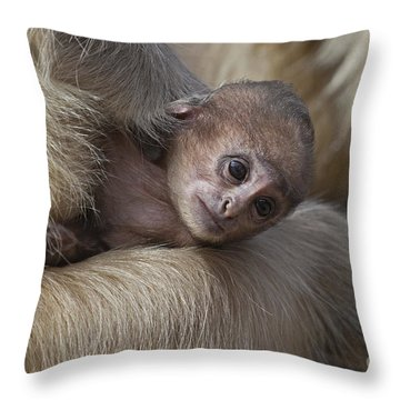 120820p269 Throw Pillow