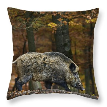 Throw Pillow featuring the photograph 121213p284 by Arterra Picture Library