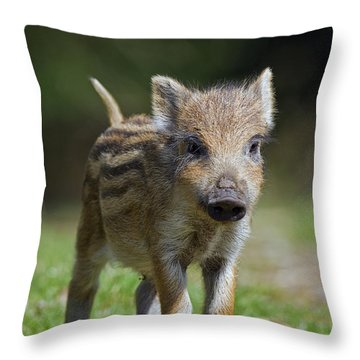 130109p243 Throw Pillow by Arterra Picture Library