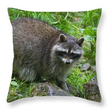 Throw Pillow featuring the photograph 130201p045 by Arterra Picture Library