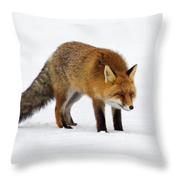 Throw Pillow featuring the photograph 130201p052 by Arterra Picture Library