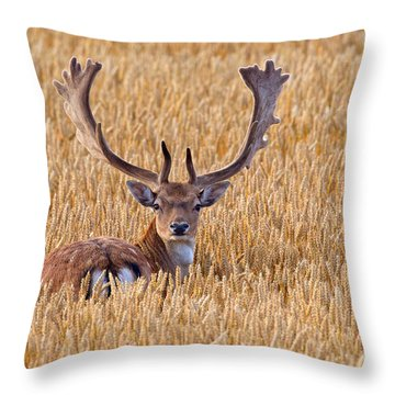 Throw Pillow featuring the photograph 130201p293 by Arterra Picture Library