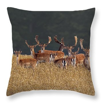 Throw Pillow featuring the photograph 130201p298 by Arterra Picture Library