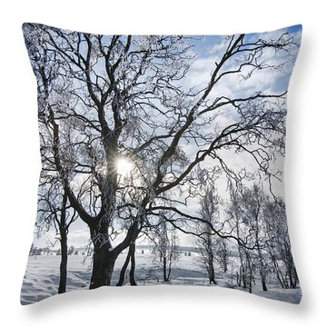 Throw Pillow featuring the photograph 130201p341 by Arterra Picture Library