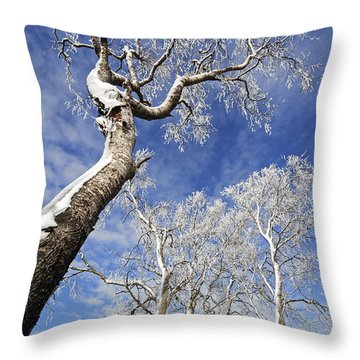 Throw Pillow featuring the photograph 130201p343 by Arterra Picture Library