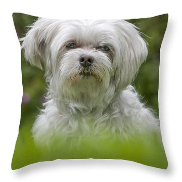 130918p024 Throw Pillow by Arterra Picture Library