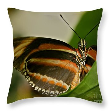Throw Pillow featuring the photograph Butterfly by Olga Hamilton
