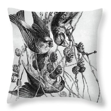 Blackburn Birds, 1895 Throw Pillow