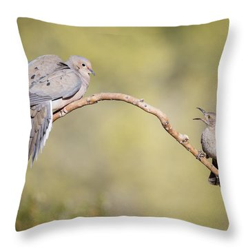 Mourning Dove Throw Pillows
