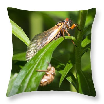 Throw Pillow featuring the photograph 17 Year Itch by Rebecca Sherman