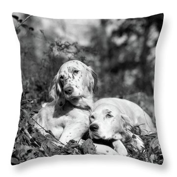 1920s Two Sweet English Setters Laying Throw Pillow