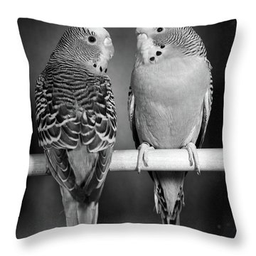 1960s Pair Of Parakeets Perched Throw Pillow
