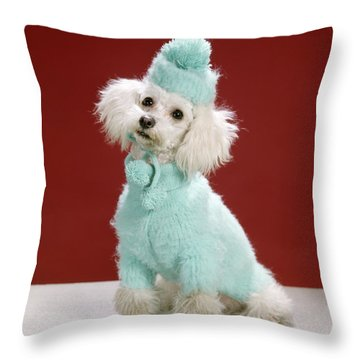 1970s White Poodle Wearing Blue Sweater Throw Pillow