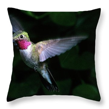 1980s Broad-tailed Hummingbird Throw Pillow