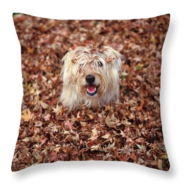 1990s Dog Covered In Leaves Throw Pillow