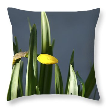 Throw Pillow featuring the photograph 1st Daff by Joe Schofield