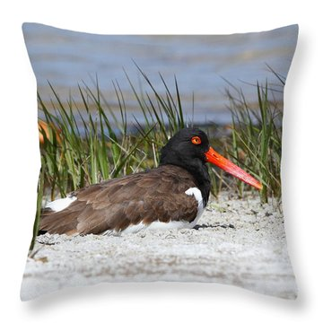 American Oystercatcher Throw Pillow by Jennifer Zelik