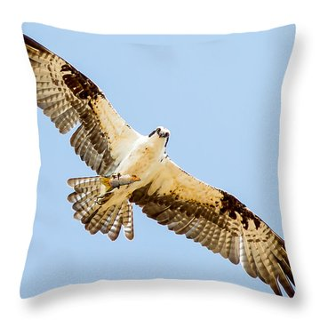 An Osprey Feeding On A Trout Throw Pillow by Brian Williamson