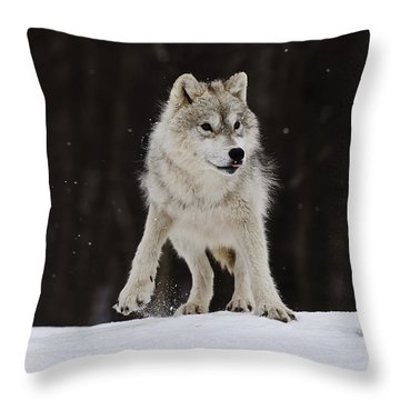 Throw Pillow featuring the photograph Arctic Wolf by Wolves Only