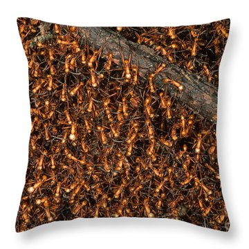 Army Ant Bivouac Site Throw Pillow by Gregory G. Dimijian, M.D.