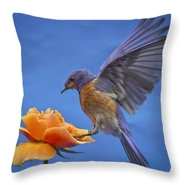 Balancing Act Throw Pillow by Jean Noren
