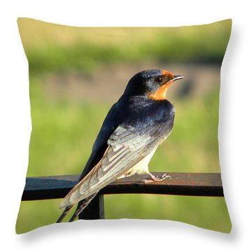 Throw Pillow featuring the photograph Barn Swallow by James Petersen