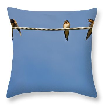Barn Swallows Throw Pillow by Melinda Fawver