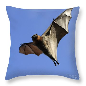 Bat Throw Pillow