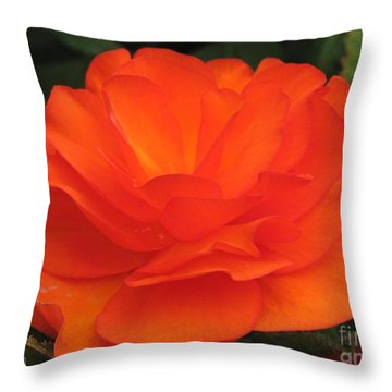 Begonia Named Nonstop Apricot Throw Pillow by J McCombie
