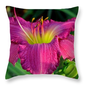 Throw Pillow featuring the photograph Bela Lugosi Daylily by Suzanne Stout