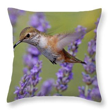 Bird Of Summer Throw Pillow