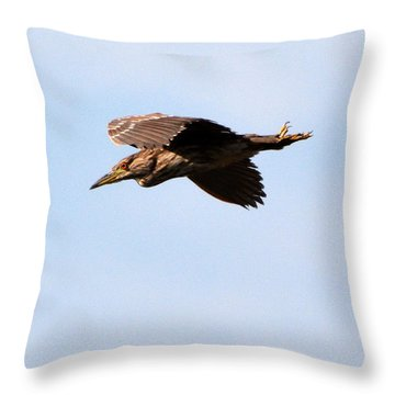 Black-crowned Night Heron Throw Pillow by Dan Williams