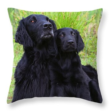 Black Flat Coated Retriever With Puppy Throw Pillow